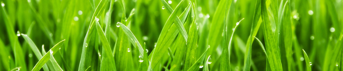 Best Time to Plant Grass